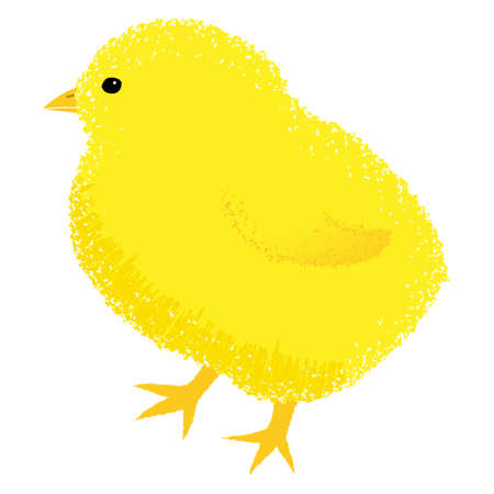 Vector illustration of cute chick on white background