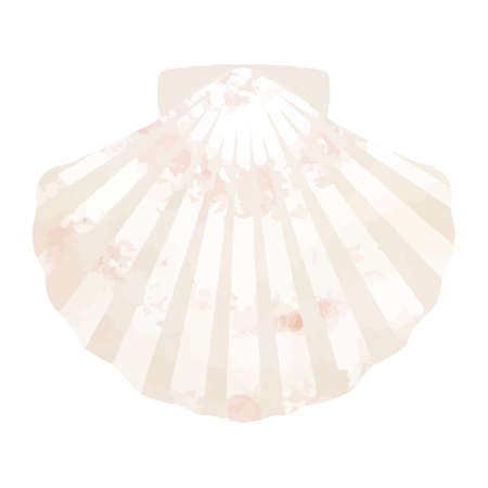 Vector illustration of scallop on white background  イラスト・ベクター素材
