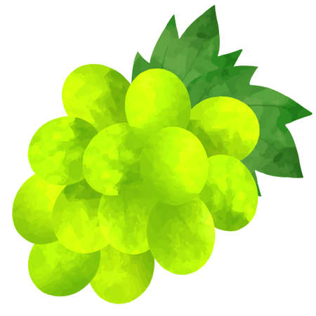 Illustration of a bunch of grapes on a white background