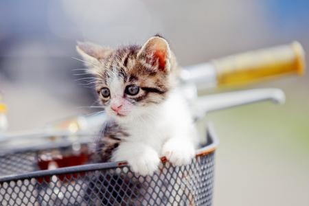 自転車の上の猫