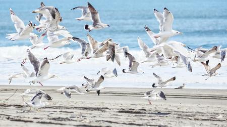 natue: seagull Stock Photo