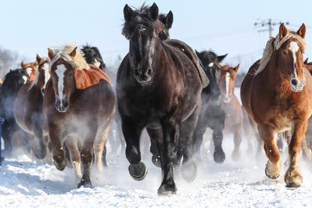 冬馬を実行 写真素材