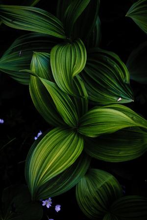 grass beautiful: green leaf Stock Photo