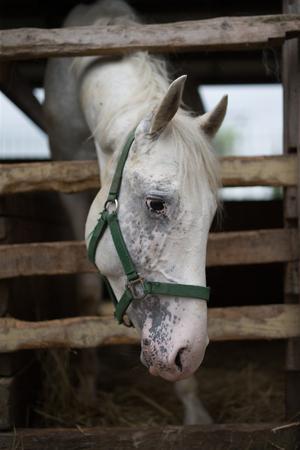 馬小屋で馬 写真素材 - 54732528