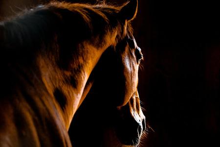 馬小屋で馬 写真素材