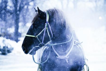 冬馬 写真素材