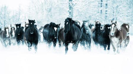 running horses: running horses in winter