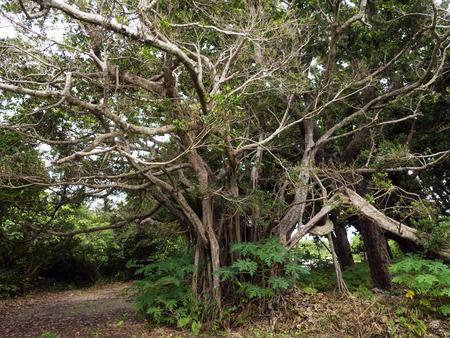big: big tree