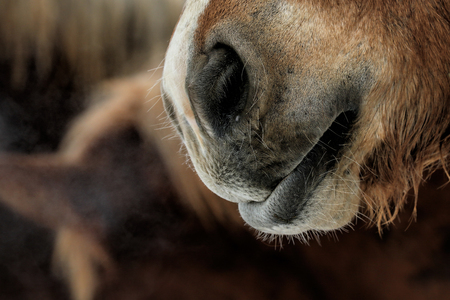 nose: nose of horse