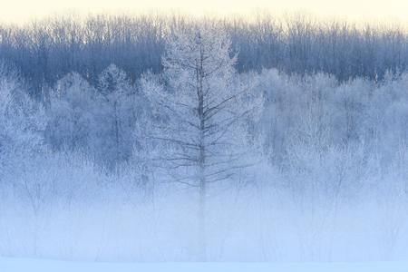 winter landscape Фото со стока