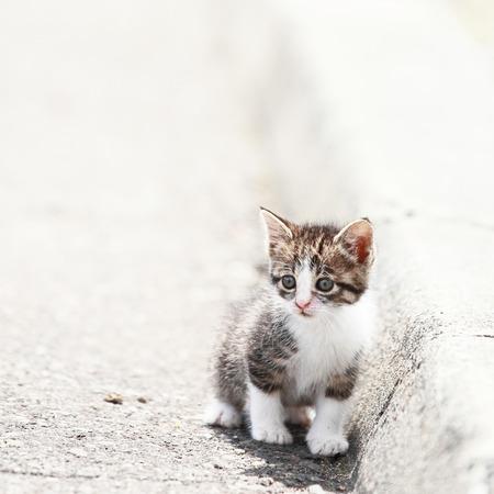 道路上のかわいい子猫 写真素材