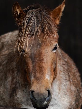 馬の顔 写真素材 - 59673746