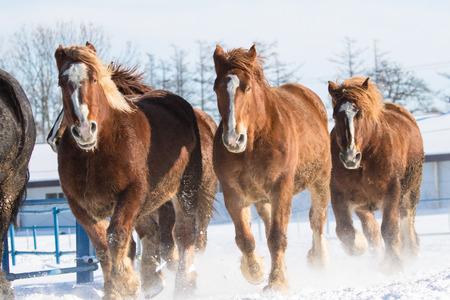 running horses in winter