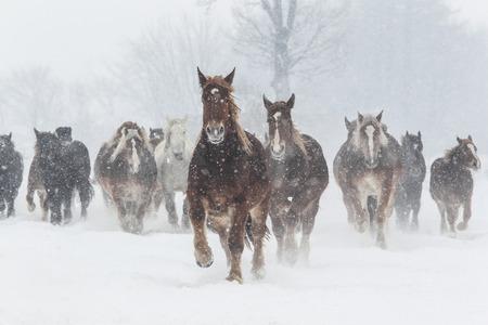 poblacion: caballos corriendo en el invierno Foto de archivo