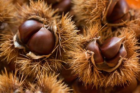 chestnut: chestnut Stock Photo