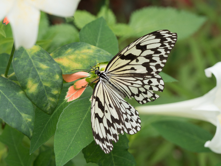 emergence: butterfly