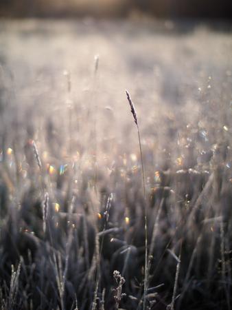 freeze dried: winter landscape Stock Photo