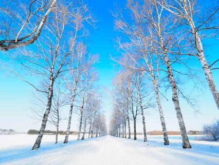 tree lined street in winter Stock Photo