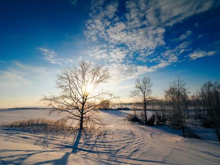 霜覆われたツリー 写真素材 - 70198812
