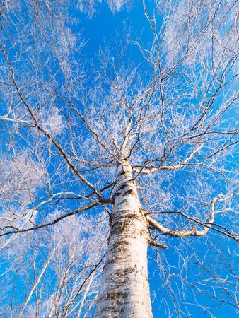 霜覆われたツリー 写真素材 - 71038344