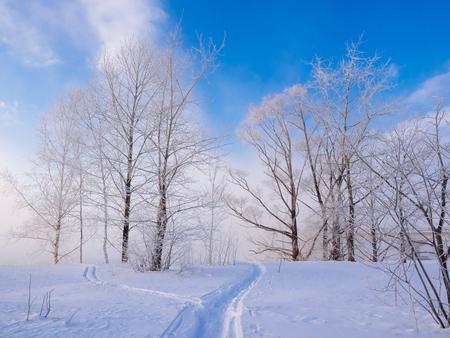 霜覆われたツリー 写真素材 - 71039305