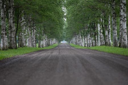 並木通り 写真素材 - 71039443