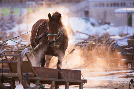 horse race in hokkaido