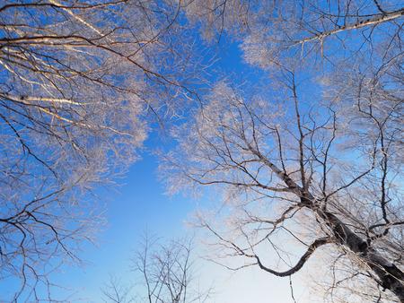 霜覆われたツリー 写真素材 - 71042718