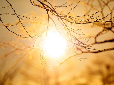 冬の日の出