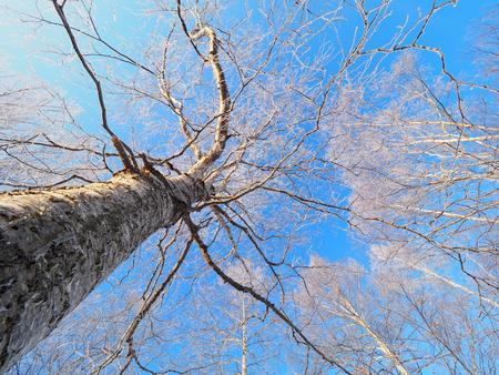 霜覆われたツリーと青空 写真素材 - 71061763