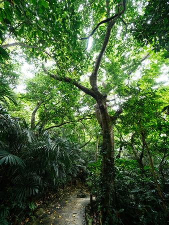 沖縄のジャングル 写真素材