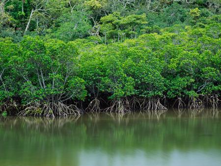 mangrove Stock fotó - 80036445