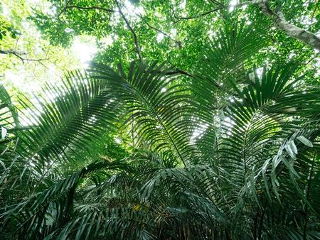石垣島のジャングル 写真素材