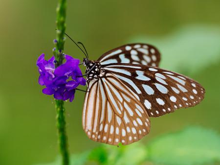 landscape: butterfly