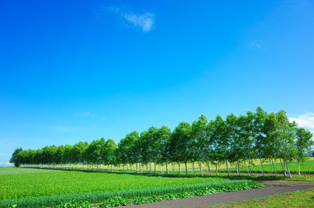 北海道を風景します。 写真素材 - 82240997