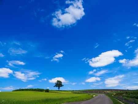 landscape of hokkaido