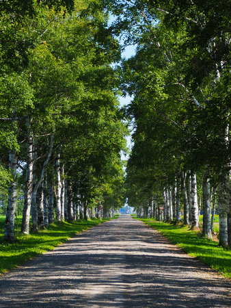tree lined street Stock Photo