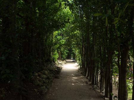 沖縄の並木通り