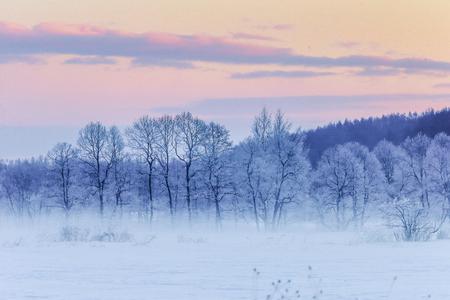 winter landscape in hokkaido