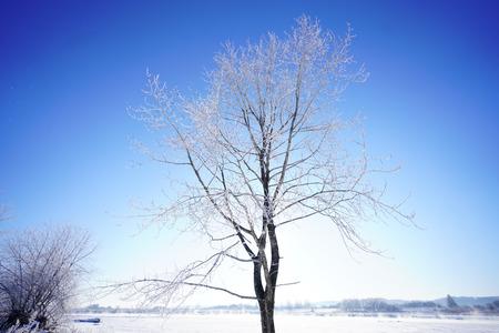 冬の白樺 写真素材 - 92321095
