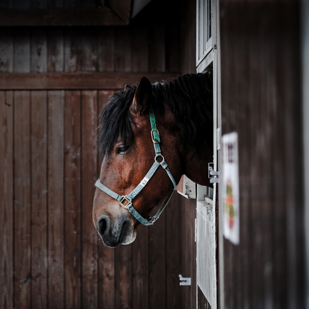 horse in stable 写真素材