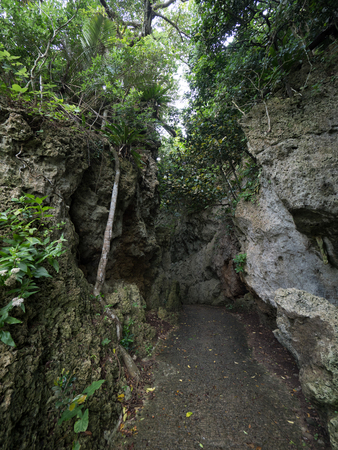 jungle in ishigaki island