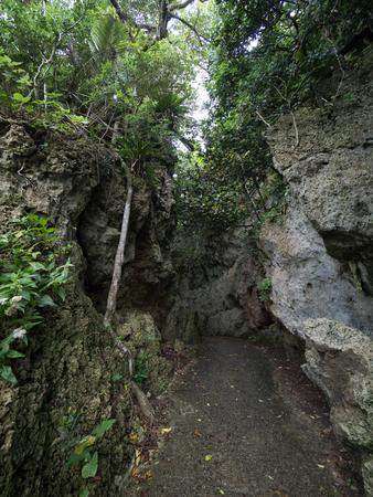 jungle in ishigaki island