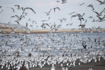 Horde of birds