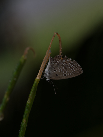small butterfly in okinawa
