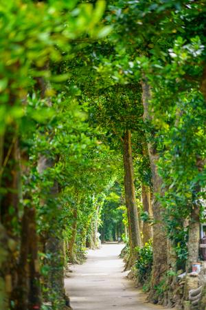 tree lined street in okinawa Stock Photo