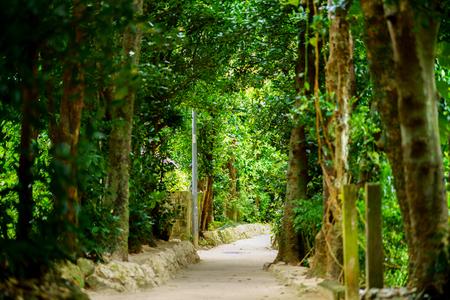 tree lined street in okinawa 写真素材