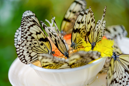 rice paper butterfly Stockfoto