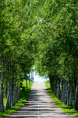 tree lined street 写真素材