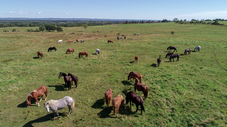 horse in wide pasture